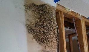 Mold Infestation Inside Drywall