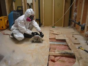 A Technician Conducting Mold and Water Restoration