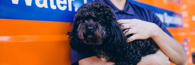 911 Restoration of Westchester Pup